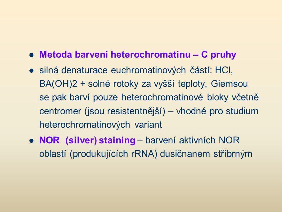 Metoda barvení heterochromatinu – C pruhy silná denaturace euchromatinových částí: HCl, BA(OH)2 + solné rotoky za vyšší teploty, Giemsou se pak barví