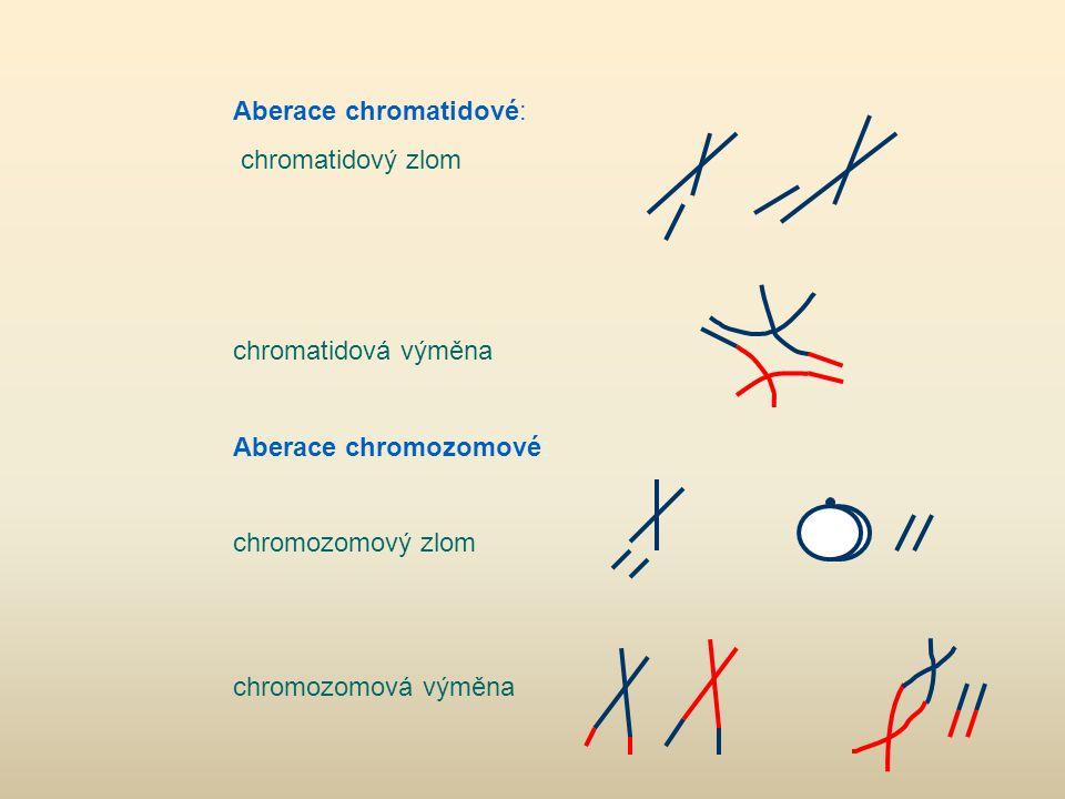 Aberace chromatidové: chromatidový zlom chromatidová výměna Aberace chromozomové: chromozomový zlom chromozomová výměna