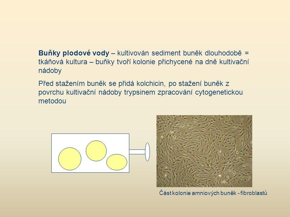 Buňky plodové vody – kultivován sediment buněk dlouhodobě = tkáňová kultura – buňky tvoří kolonie přichycené na dně kultivační nádoby Před stažením bu