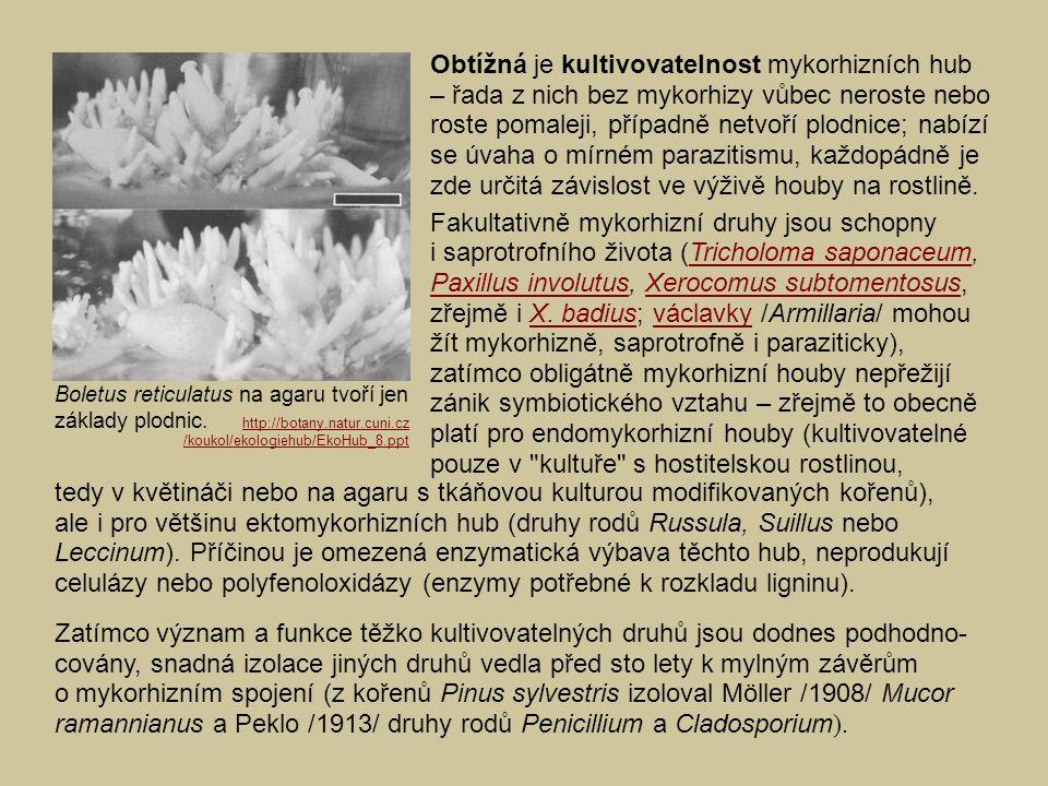 Obtížná je kultivovatelnost mykorhizních hub – řada z nich bez mykorhizy vůbec neroste nebo roste pomaleji, případně netvoří plodnice; nabízí se úvaha