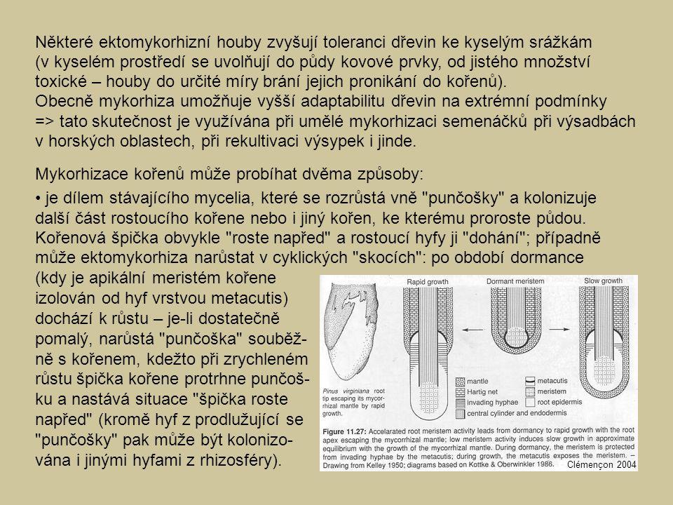 Některé ektomykorhizní houby zvyšují toleranci dřevin ke kyselým srážkám (v kyselém prostředí se uvolňují do půdy kovové prvky, od jistého množství to