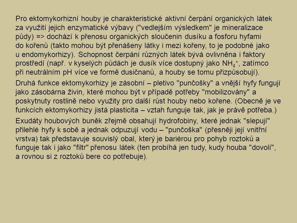 Pro ektomykorhizní houby je charakteristické aktivní čerpání organických látek za využití jejich enzymatické výbavy (
