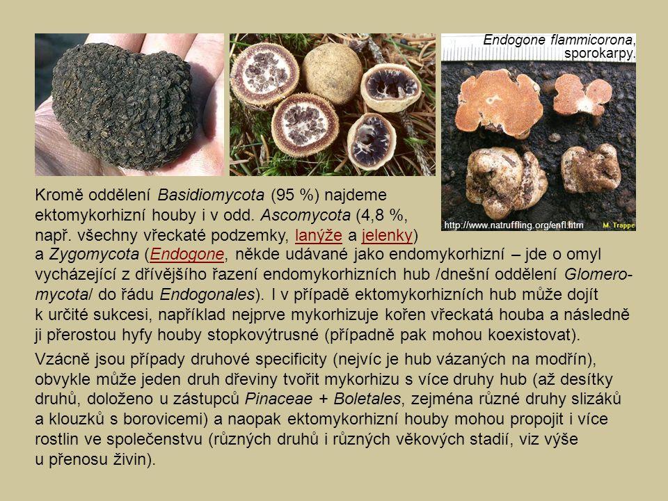 a Zygomycota (Endogone, někde udávané jako endomykorhizní – jde o omyl vycházející z dřívějšího řazení endomykorhizních hub /dnešní oddělení Glomero-