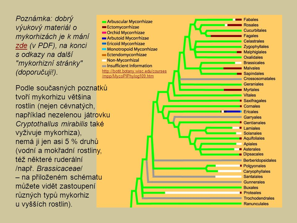 Podle současných poznatků tvoří mykorhizu většina rostlin (nejen cévnatých, například nezelenou játrovku Cryptothallus mirabilis také vyživuje mykorhi