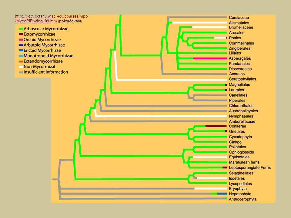 Pro úplnost zmiňme, že houby samozřejmě nejsou jedinými symbionty kořenů rostlin – známé jsou hlízkové bakterie (Rhizobium) nebo aktinomycety (Frankia) tvořící na kořenech nádorovité hálky, tzv.