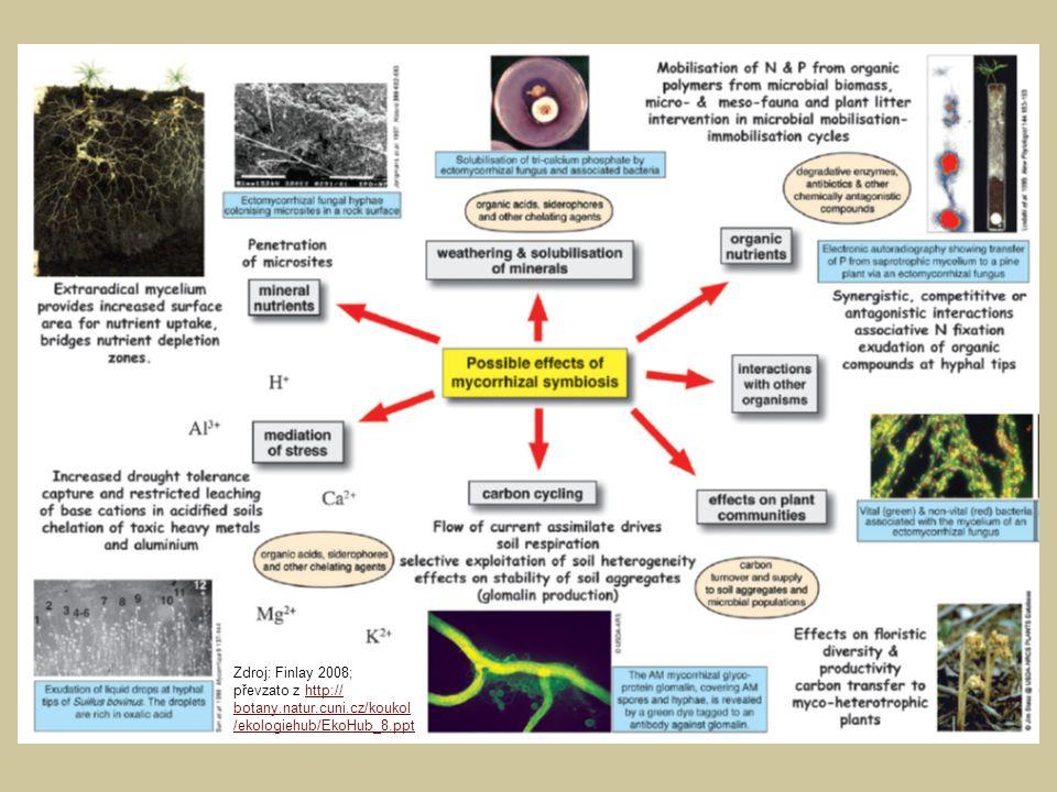 Síť hyf může dosahovat daleko od kořene (u endomykorhizních hub až 10 cm, u ektomykorhizních i více) a z celého tohoto prostoru může houba čerpat látky – to má význam zejména v suchých půdách, kde nemohou látky difundovat půdní vodou a přenos houbou tak přemostí chybějící spojení mezi zdrojem živin a kořenem.