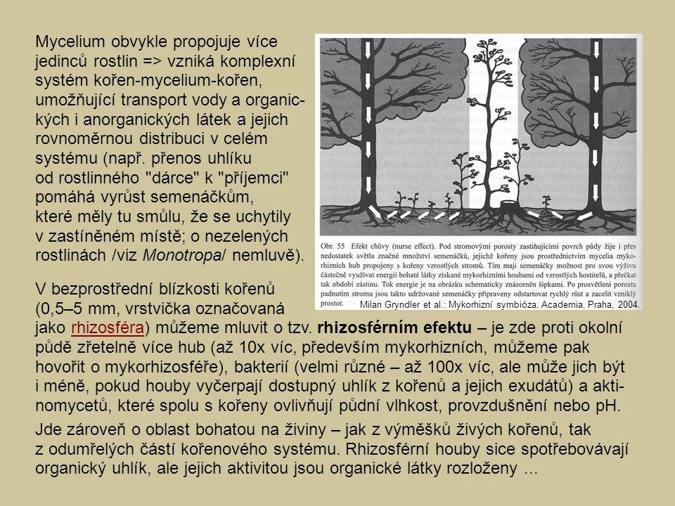 Mycelium obvykle propojuje více jedinců rostlin => vzniká komplexní systém kořen-mycelium-kořen, umožňující transport vody a organic- kých i anorganic