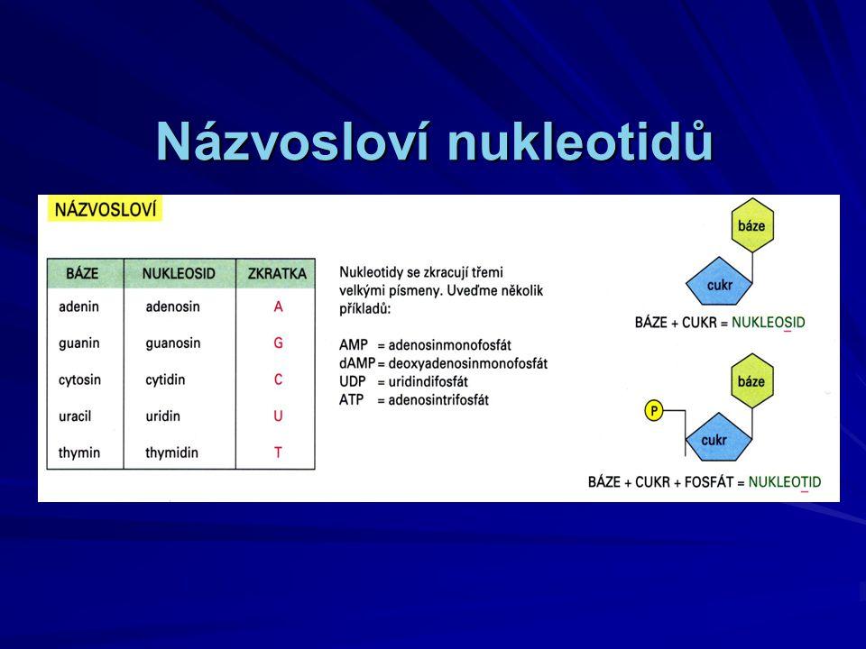 Hybridizace DNA