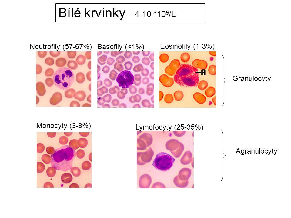 Monocyty (3-8%) Neutrofily (57-67%) Basofily (<1%) Eosinofily (1-3%) Granulocyty Lymofocyty (25-35%) Agranulocyty Bílé krvinky 4-10 *10 9 /L