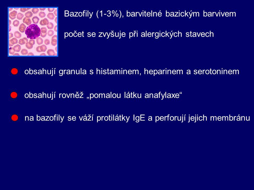 """Bazofily (1-3%), barvitelné bazickým barvivem počet se zvyšuje při alergických stavech obsahují granula s histaminem, heparinem a serotoninem na bazofily se váží protilátky IgE a perforují jejich membránu obsahují rovněž """"pomalou látku anafylaxe"""