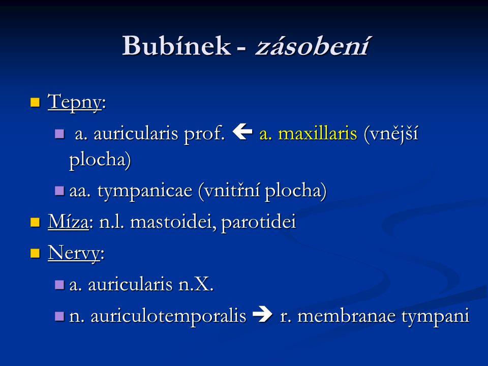 Bubínek - zásobení Tepny: Tepny: a. auricularis prof.  a. maxillaris (vnější plocha) a. auricularis prof.  a. maxillaris (vnější plocha) aa. tympani