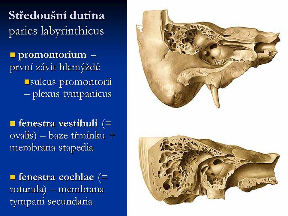 promontorium – první závit hlemýždě promontorium – první závit hlemýždě sulcus promontorii – plexus tympanicus sulcus promontorii – plexus tympanicus fenestra vestibuli (= ovalis) – baze třmínku + membrana stapedia fenestra vestibuli (= ovalis) – baze třmínku + membrana stapedia fenestra cochlae (= rotunda) – membrana tympani secundaria fenestra cochlae (= rotunda) – membrana tympani secundaria Středoušní dutina paries labyrinthicus