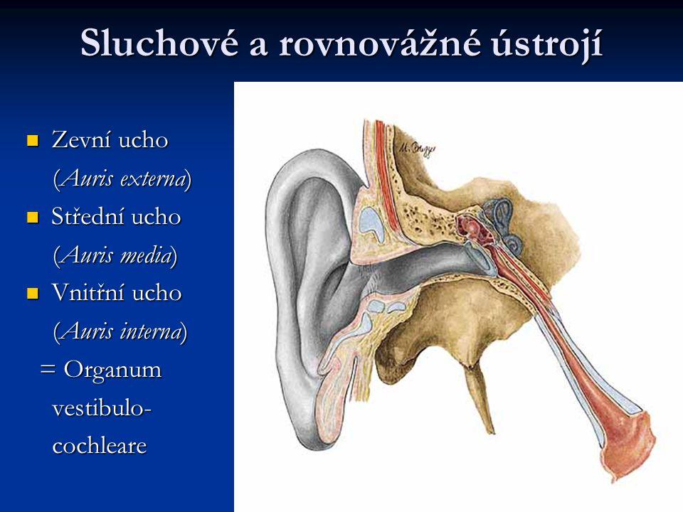 Sluchové a rovnovážné ústrojí Zevní ucho Zevní ucho (Auris externa) (Auris externa) Střední ucho Střední ucho (Auris media) (Auris media) Vnitřní ucho Vnitřní ucho (Auris interna) (Auris interna) = Organum = Organum vestibulo- vestibulo- cochleare cochleare