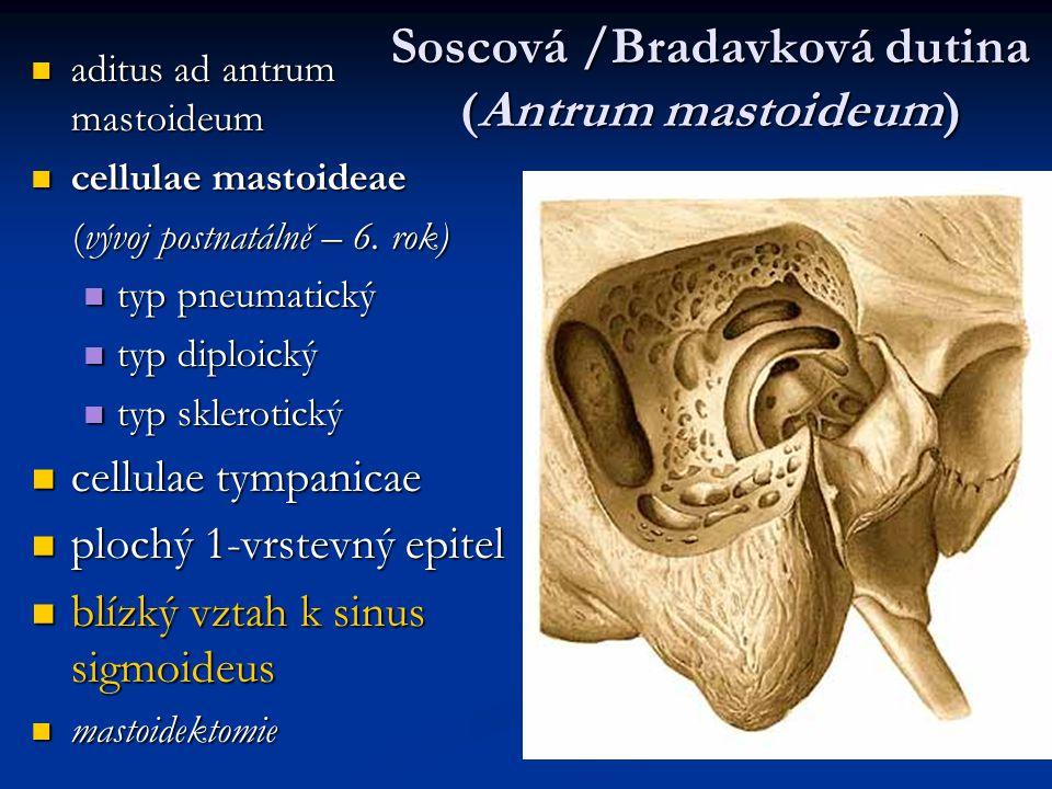 Soscová /Bradavková dutina (Antrum mastoideum) aditus ad antrum mastoideum aditus ad antrum mastoideum cellulae mastoideae cellulae mastoideae (vývoj postnatálně – 6.