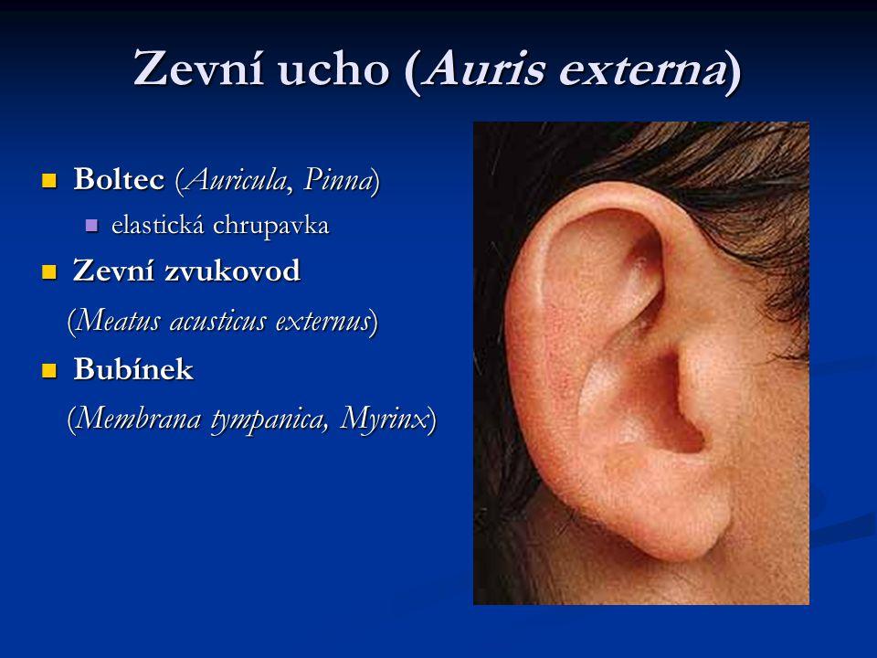 Zevní ucho (Auris externa) Boltec (Auricula, Pinna) Boltec (Auricula, Pinna) elastická chrupavka elastická chrupavka Zevní zvukovod Zevní zvukovod (Meatus acusticus externus) (Meatus acusticus externus) Bubínek Bubínek (Membrana tympanica, Myrinx) (Membrana tympanica, Myrinx)