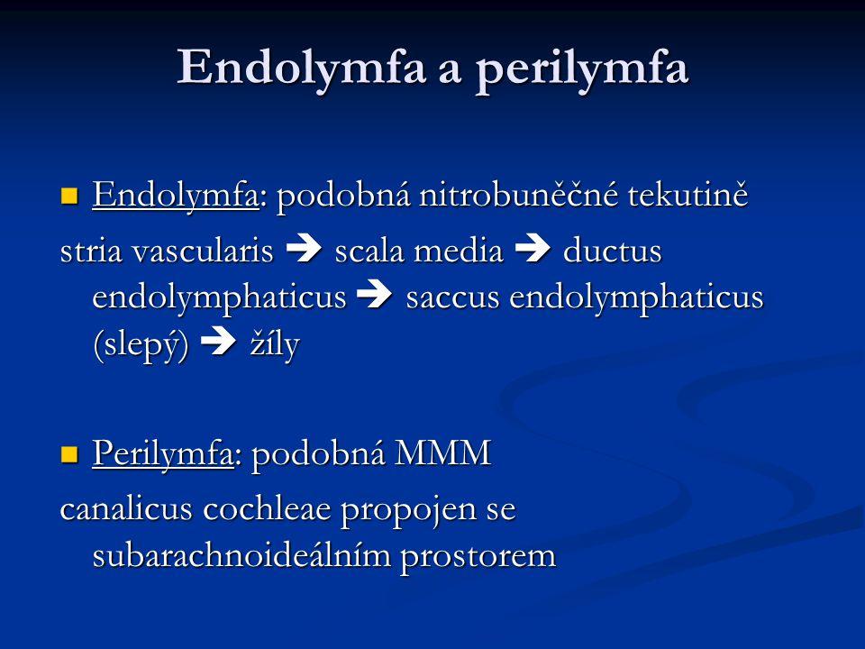 Endolymfa a perilymfa Endolymfa: podobná nitrobuněčné tekutině Endolymfa: podobná nitrobuněčné tekutině stria vascularis  scala media  ductus endolymphaticus  saccus endolymphaticus (slepý)  žíly Perilymfa: podobná MMM Perilymfa: podobná MMM canalicus cochleae propojen se subarachnoideálním prostorem