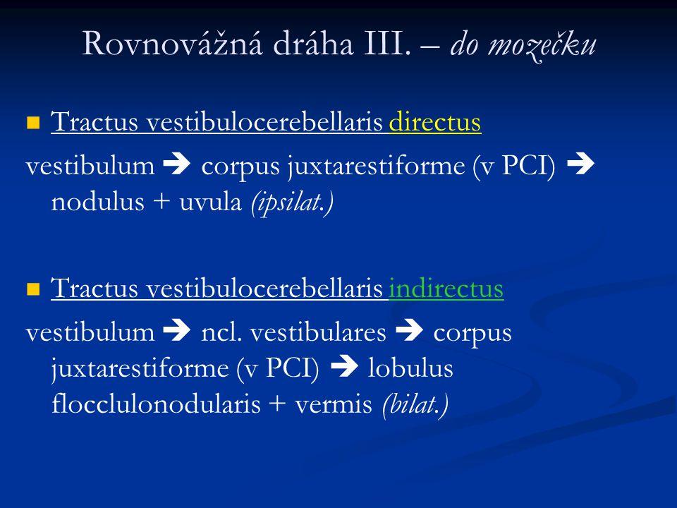 Tractus vestibulocerebellaris directus vestibulum  corpus juxtarestiforme (v PCI)  nodulus + uvula (ipsilat.) Tractus vestibulocerebellaris indirectus vestibulum  ncl.