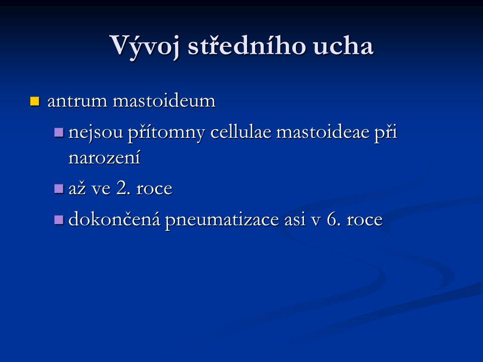 Vývoj středního ucha antrum mastoideum antrum mastoideum nejsou přítomny cellulae mastoideae při narození nejsou přítomny cellulae mastoideae při narození až ve 2.