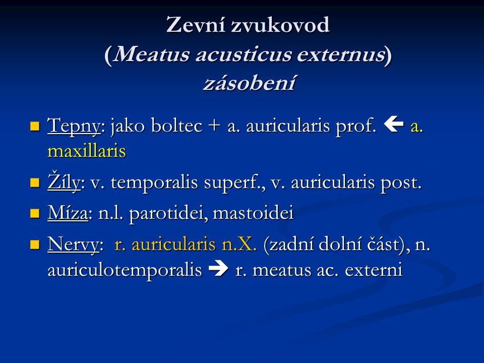 Zevní zvukovod (Meatus acusticus externus) zásobení Tepny: jako boltec + a. auricularis prof.  a. maxillaris Tepny: jako boltec + a. auricularis prof