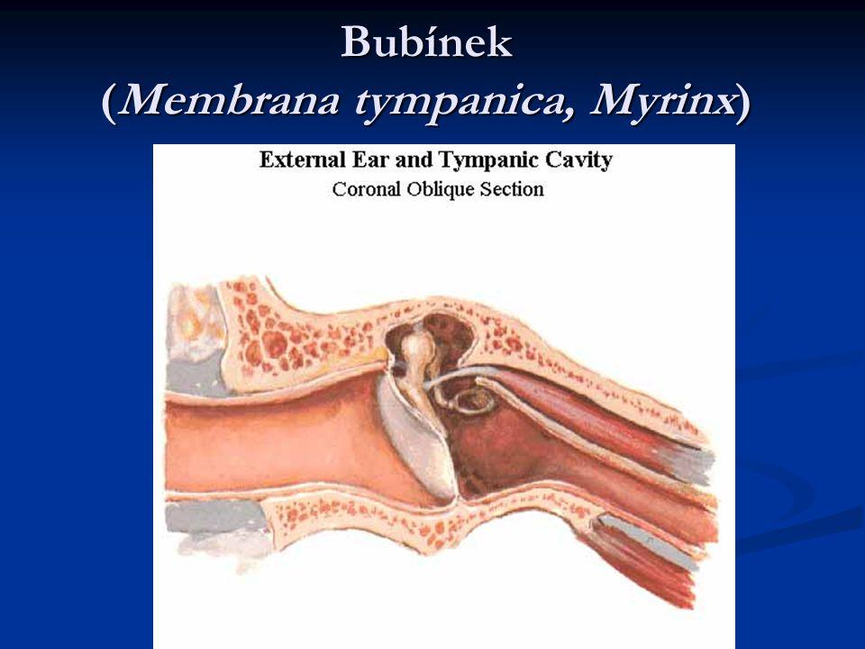 Bubínek (Membrana tympanica, Myrinx)