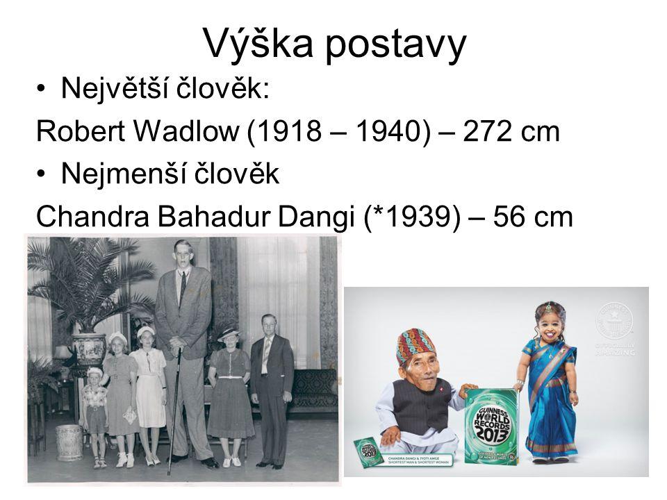 Výška postavy Průměrná celosvětová výška Muži 173 cm, ženy 160 cm Nejvyšší národ Nizozemci muži 183 cm, ženy 170 Nejmenší národ lovci a sběrači Efé, Kongo průměrná výška 150 cm Česká republika muži 180 cm, ženy 167 cm
