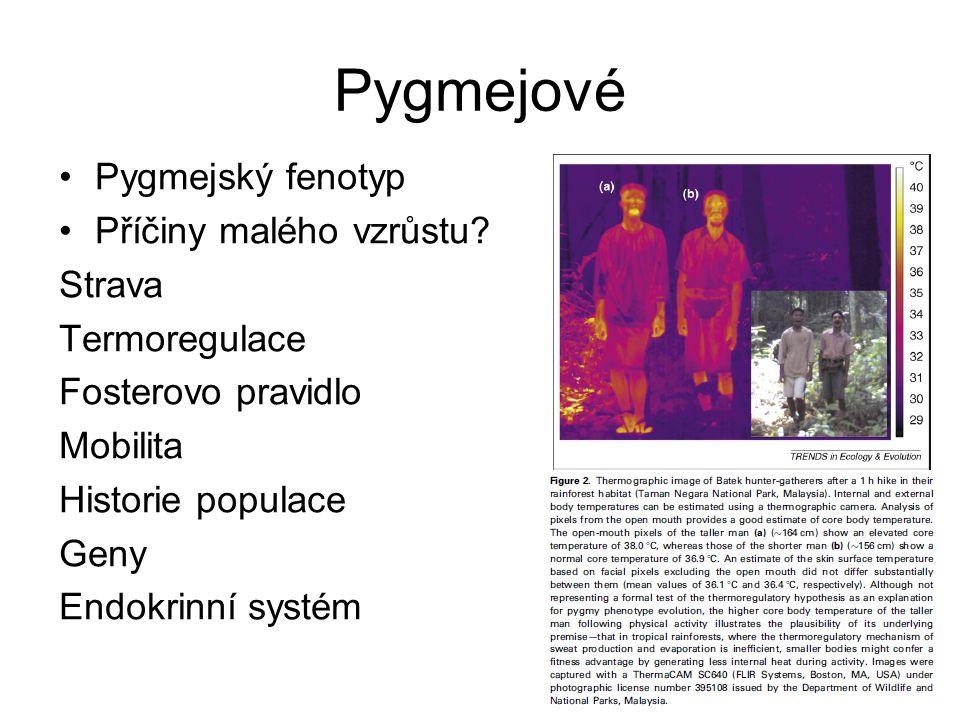 Pygmejové Pygmejský fenotyp Příčiny malého vzrůstu? Strava Termoregulace Fosterovo pravidlo Mobilita Historie populace Geny Endokrinní systém