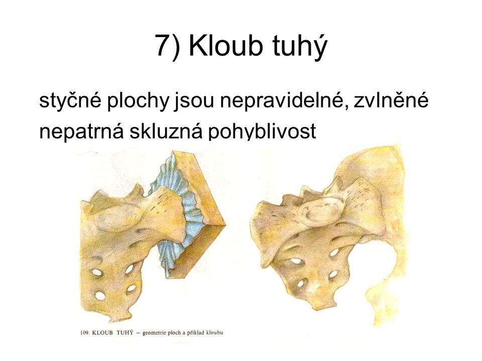 7) Kloub tuhý styčné plochy jsou nepravidelné, zvlněné nepatrná skluzná pohyblivost