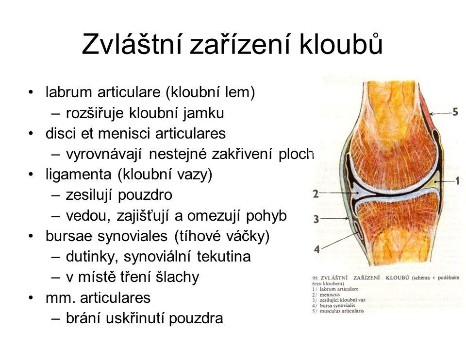 Zvláštní zařízení kloubů labrum articulare (kloubní lem) –rozšiřuje kloubní jamku disci et menisci articulares –vyrovnávají nestejné zakřivení ploch l
