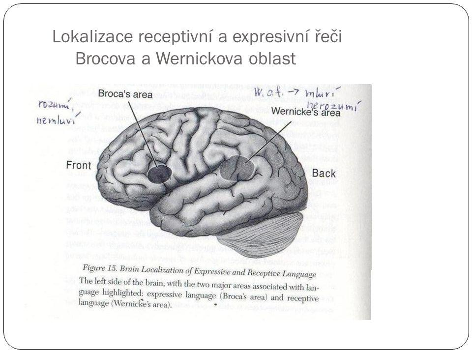 Lokalizace receptivní a expresivní řeči Brocova a Wernickova oblast
