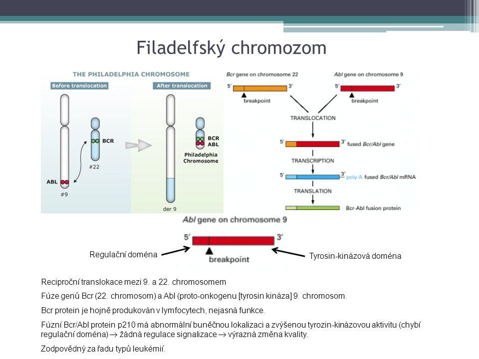 Reciproční translokace mezi 9. a 22. chromosomem Fúze genů Bcr (22. chromosom) a Abl (proto-onkogenu [tyrosin kináza] 9. chromosom. Bcr protein je hoj