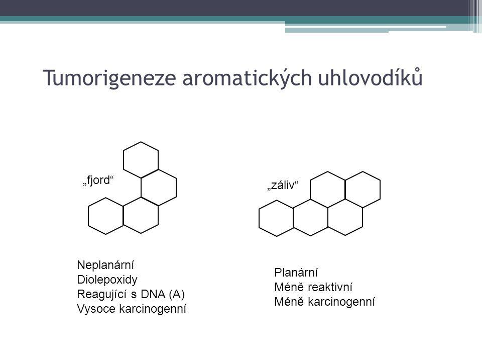 """Tumorigeneze aromatických uhlovodíků """"fjord"""" """"záliv"""" Neplanární Diolepoxidy Reagující s DNA (A) Vysoce karcinogenní Planární Méně reaktivní Méně karci"""