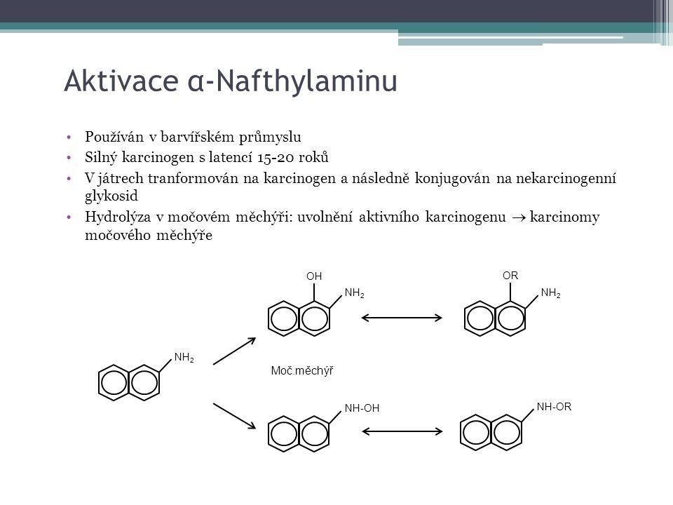 Aktivace α-Nafthylaminu NH 2 NH-OH OH NH 2 OR Moč.měchýř NH-OR Používán v barvířském průmyslu Silný karcinogen s latencí 15-20 roků V játrech tranform