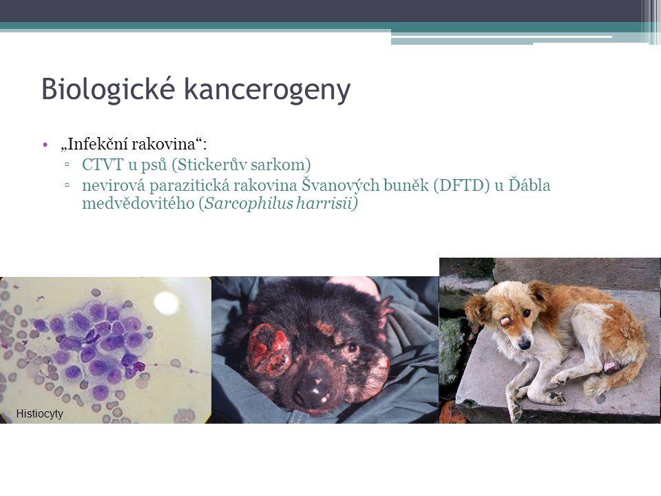 """Biologické kancerogeny """"Infekční rakovina"""": ▫CTVT u psů (Stickerův sarkom) ▫nevirová parazitická rakovina Švanových buněk (DFTD) u Ďábla medvědovitého"""