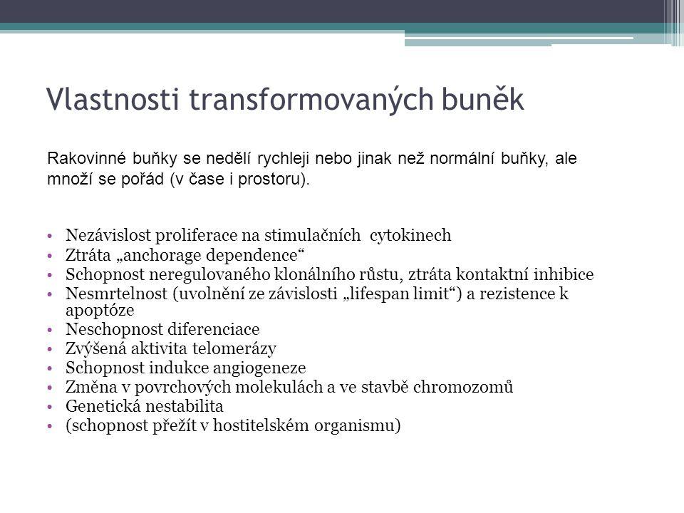 """Vlastnosti transformovaných buněk Nezávislost proliferace na stimulačních cytokinech Ztráta """"anchorage dependence"""" Schopnost neregulovaného klonálního"""