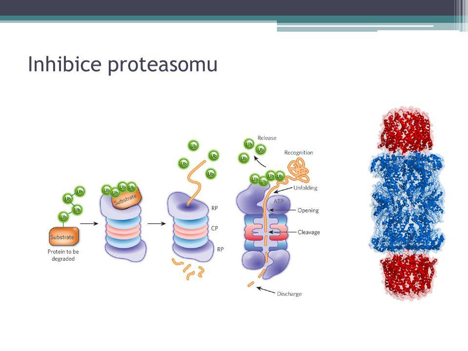 Inhibice proteasomu