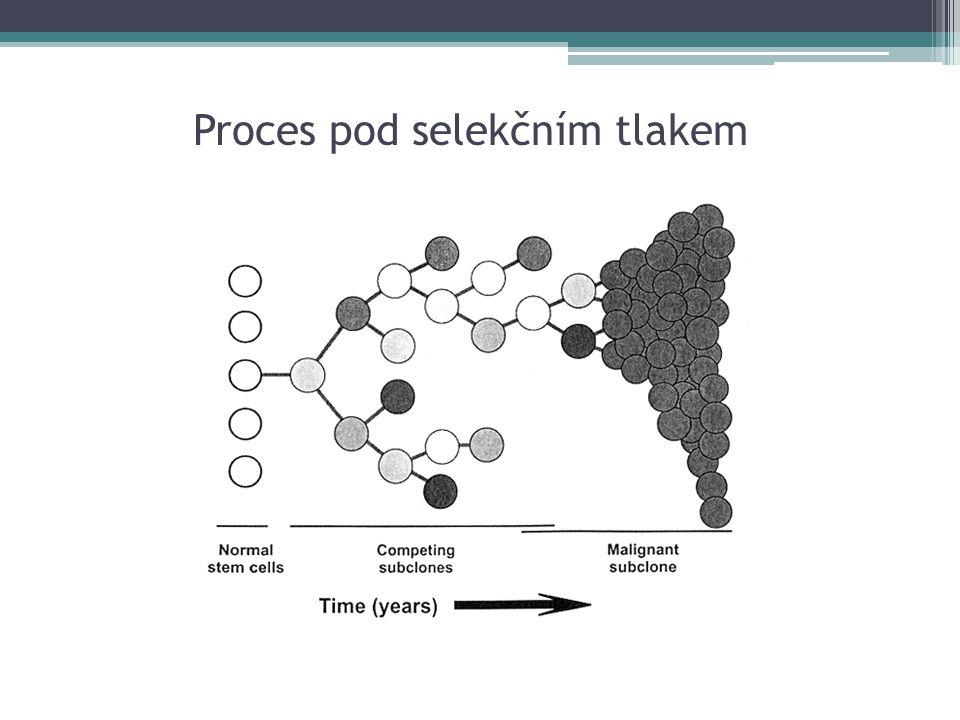Biologická léčba Preparáty: ▫Monoklonální protilátky ▫Diferenciační léčba ▫Inhibitory proteasomu, tyrosinkináz ▫Antiangiogenní léčba ▫Antisense oligonukleotidy Vysoké ceny specifických preparátu Využívá se v přesně definovaných situacích a vzhledem k extrémní finanční náročnosti pouze po splnění daných kritérií: ▫vhodný podtyp nádoru ▫vyčerpání jiných možností léčby ▫dosažení nežádoucích účinků předchozí léčby