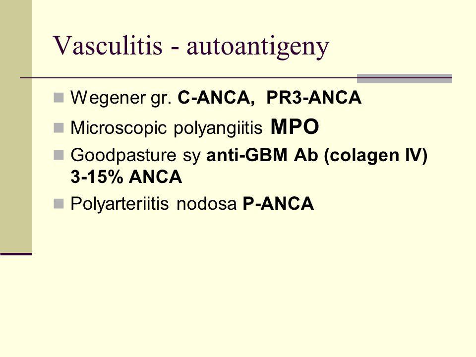 Vasculitis - autoantigeny Wegener gr.
