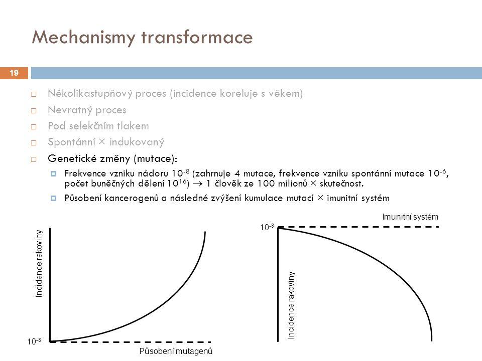 Mechanismy transformace  Několikastupňový proces (incidence koreluje s věkem)  Nevratný proces  Pod selekčním tlakem  Spontánní × indukovaný  Genetické změny (mutace):  Frekvence vzniku nádoru 10 -8 (zahrnuje 4 mutace, frekvence vzniku spontánní mutace 10 -6, počet buněčných dělení 10 16 )  1 člověk ze 100 milionů × skutečnost.