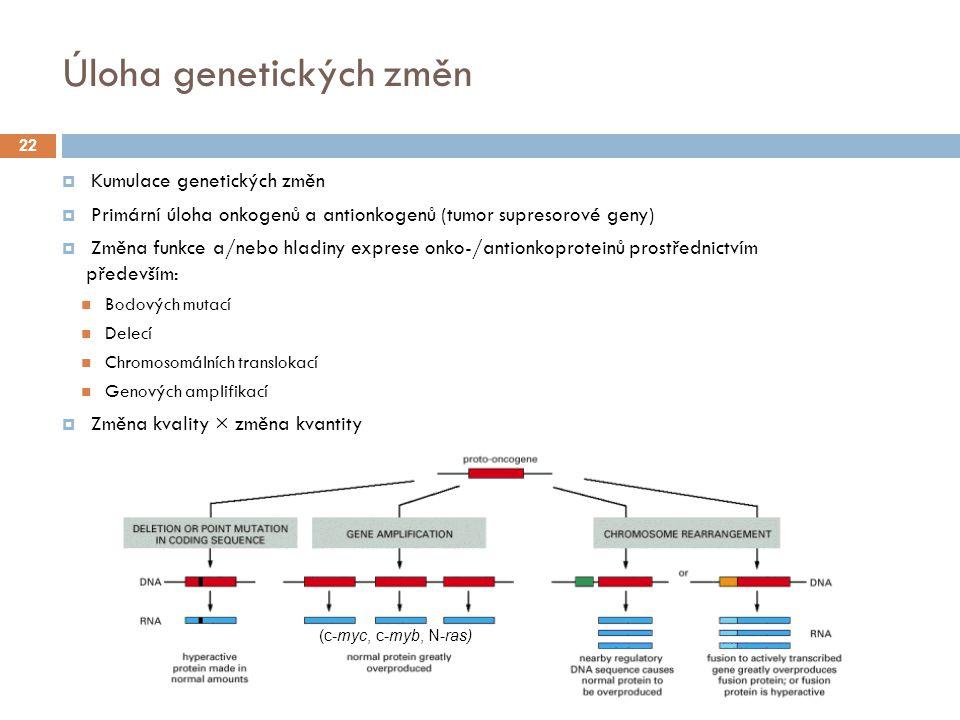 Úloha genetických změn  Kumulace genetických změn  Primární úloha onkogenů a antionkogenů (tumor supresorové geny)  Změna funkce a/nebo hladiny exprese onko-/antionkoproteinů prostřednictvím především: Bodových mutací Delecí Chromosomálních translokací Genových amplifikací  Změna kvality × změna kvantity (c-ras)(c-myc, c-myb, N-ras)) (c-abl) 22