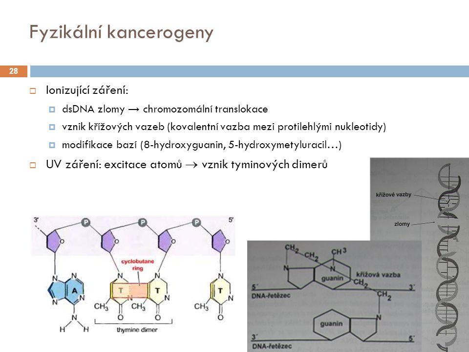 Fyzikální kancerogeny  Ionizující záření:  dsDNA zlomy → chromozomální translokace  vznik křížových vazeb (kovalentní vazba mezi protilehlými nukleotidy)  modifikace bazí (8-hydroxyguanin, 5-hydroxymetyluracil…)  UV záření: excitace atomů  vznik tyminových dimerů 28