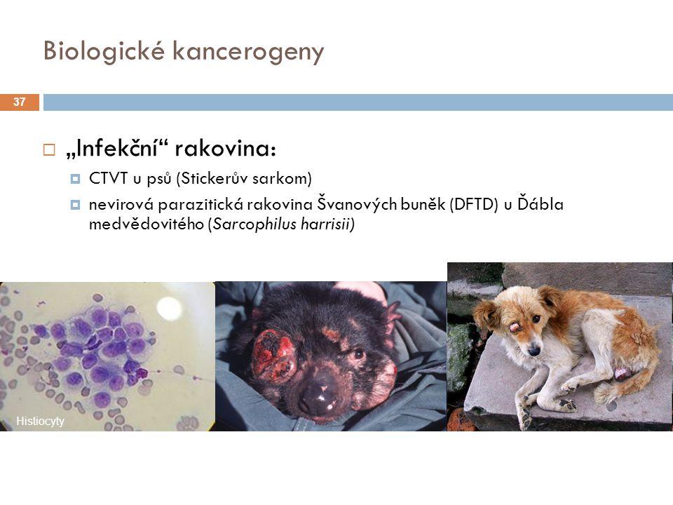 """Biologické kancerogeny  """"Infekční rakovina:  CTVT u psů (Stickerův sarkom)  nevirová parazitická rakovina Švanových buněk (DFTD) u Ďábla medvědovitého (Sarcophilus harrisii) Histiocyty 37"""