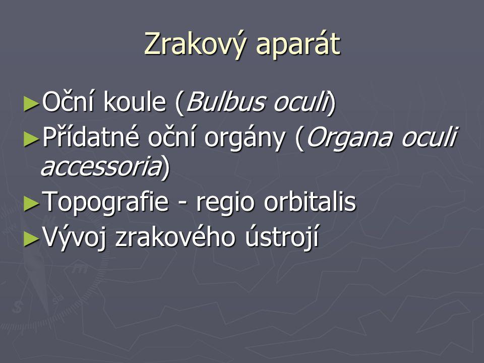 Očnice (orbita) ► tvar 4-bokého jehlanu svrženého vzad ► kostěné ohraničení ► aditus x apex ► 10 otvorů ► hladký m.