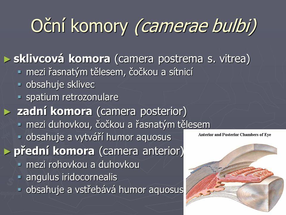 Oční komory (camerae bulbi) ► sklivcová komora (camera postrema s.