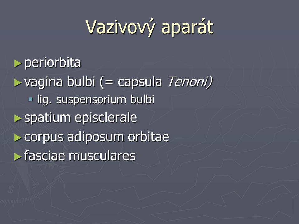 Vazivový aparát ► periorbita ► vagina bulbi (= capsula Tenoni)  lig.