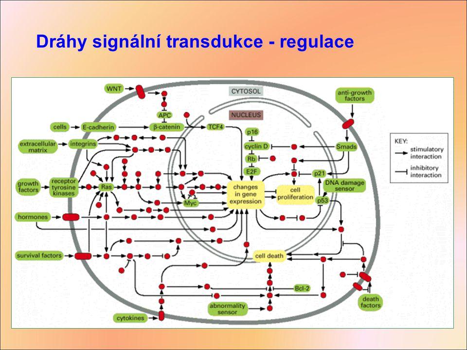 Dráhy signální transdukce - regulace