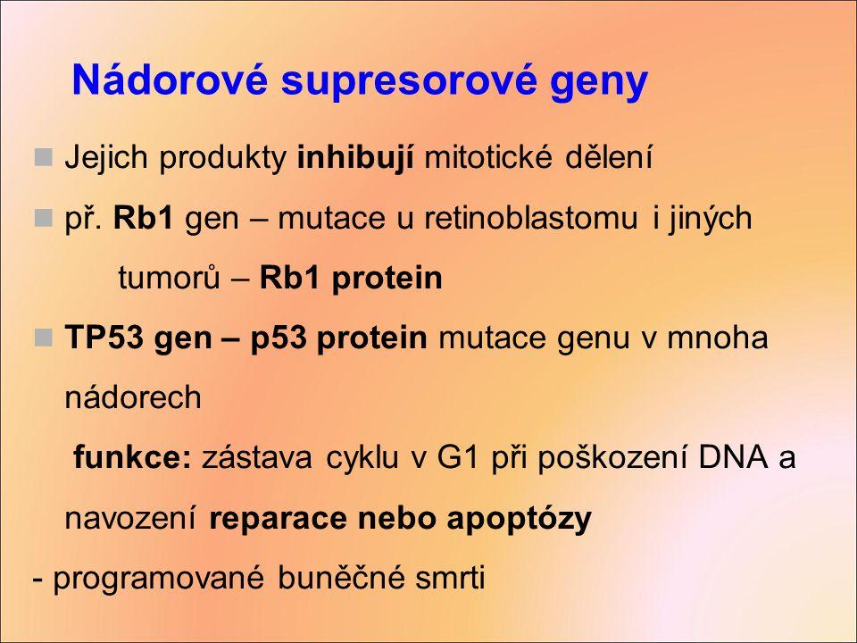 Nádorové supresorové geny Jejich produkty inhibují mitotické dělení př. Rb1 gen – mutace u retinoblastomu i jiných tumorů – Rb1 protein TP53 gen – p53