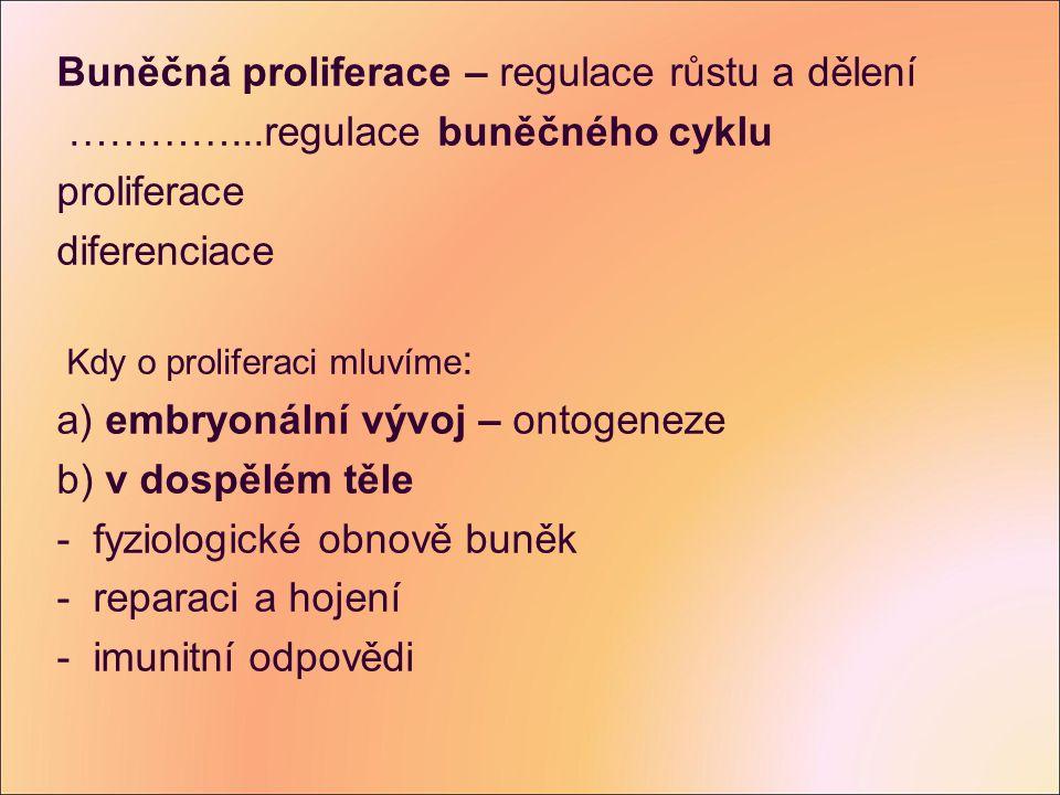 Buněčná proliferace – regulace růstu a dělení …………...regulace buněčného cyklu proliferace diferenciace Kdy o proliferaci mluvíme : a) embryonální vývo