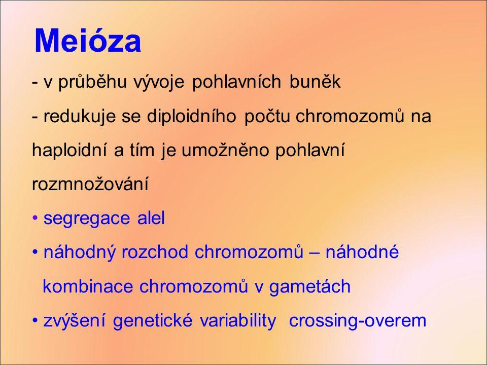 - v průběhu vývoje pohlavních buněk - redukuje se diploidního počtu chromozomů na haploidní a tím je umožněno pohlavní rozmnožování segregace alel náh