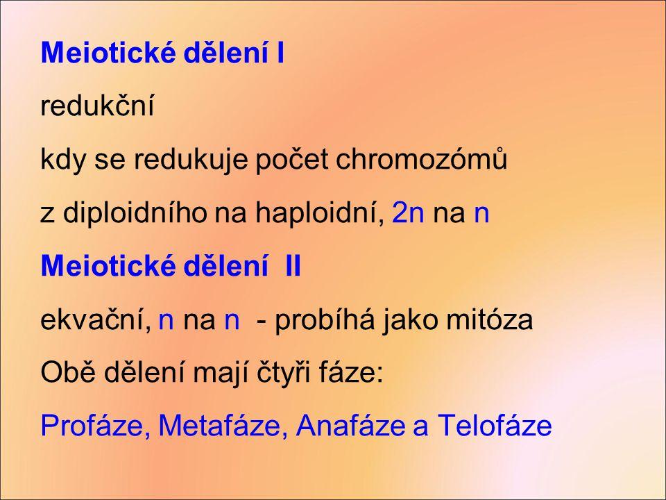 Meiotické dělení I redukční kdy se redukuje počet chromozómů z diploidního na haploidní, 2n na n Meiotické dělení II ekvační, n na n - probíhá jako mi