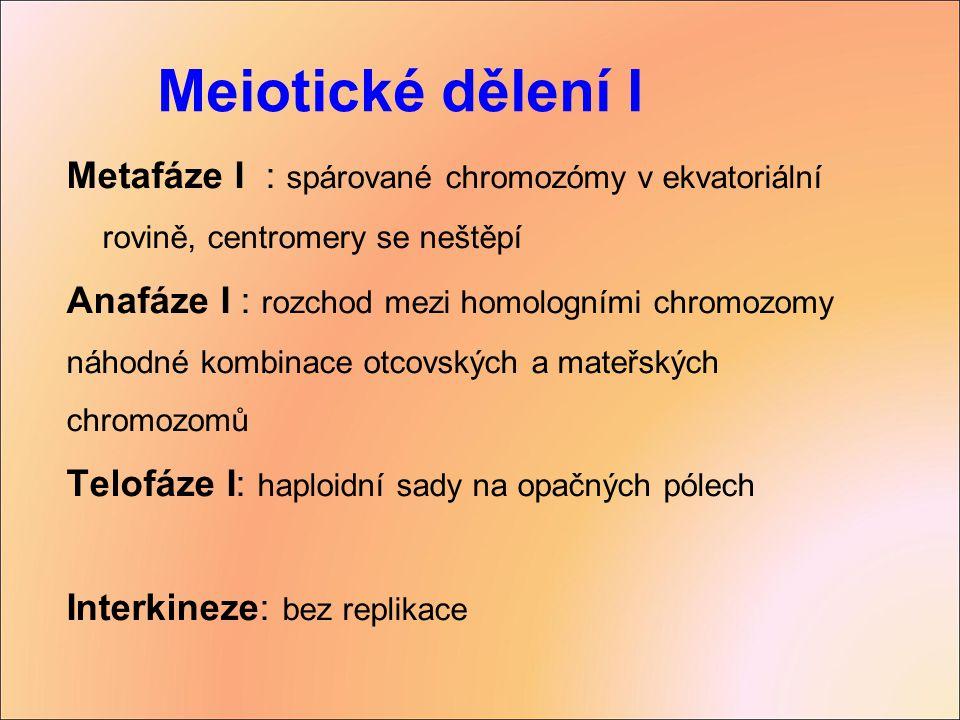 Metafáze I : spárované chromozómy v ekvatoriální rovině, centromery se neštěpí Anafáze I : rozchod mezi homologními chromozomy náhodné kombinace otcov